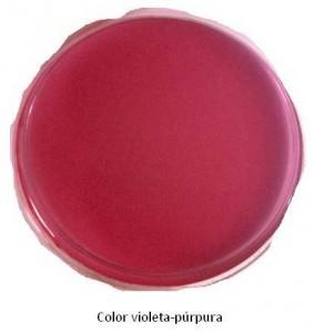 ColorVioletaPurpura